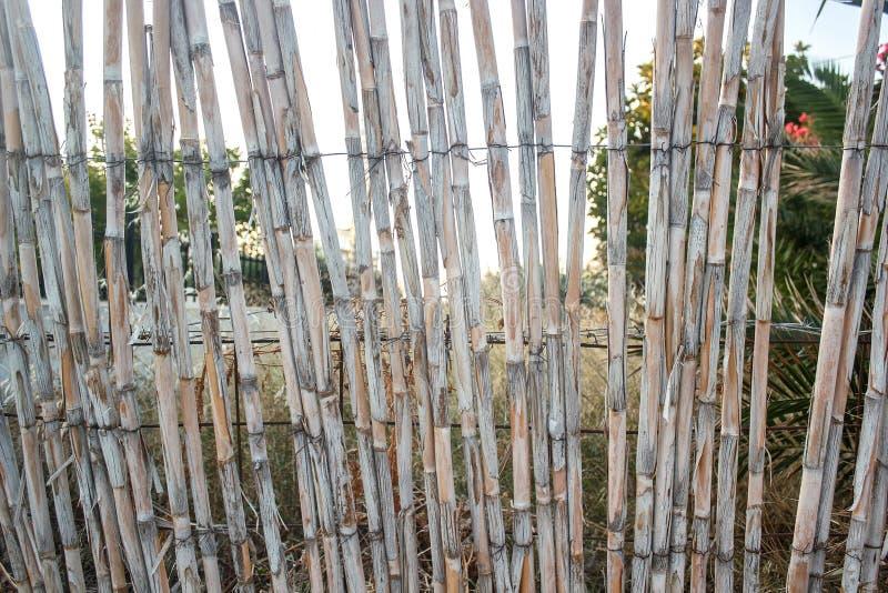 Un recinto fatto delle canne secche fotografie stock libere da diritti