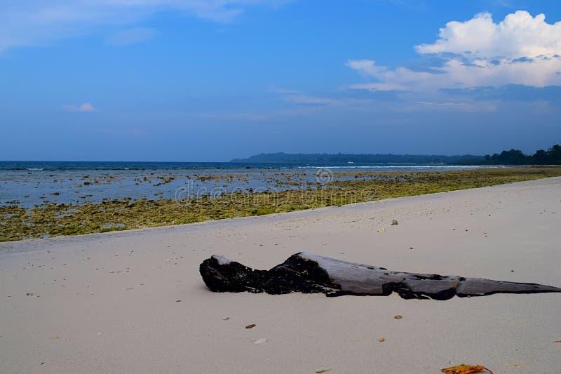 Un registro de madera en Rocky Beach, la agua de mar prístina y el cielo claro - fondo natural - Laxmanpur, Neil Island, Andaman, fotos de archivo libres de regalías