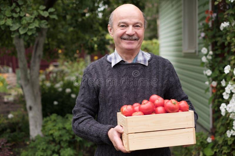 Un retraité souriant debout avec une boîte de tomates images libres de droits
