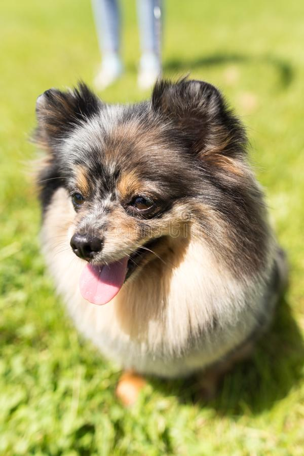 Un retrato de un perro excelente imagen de archivo