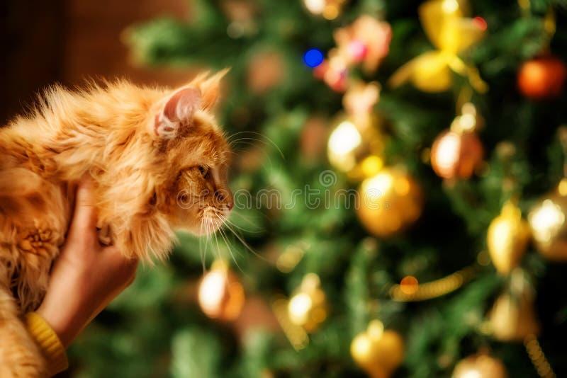 Un retrato lateral de un gato grande del jengibre con el árbol de navidad adornado en el fondo Sitio para el texto de la copia fotos de archivo