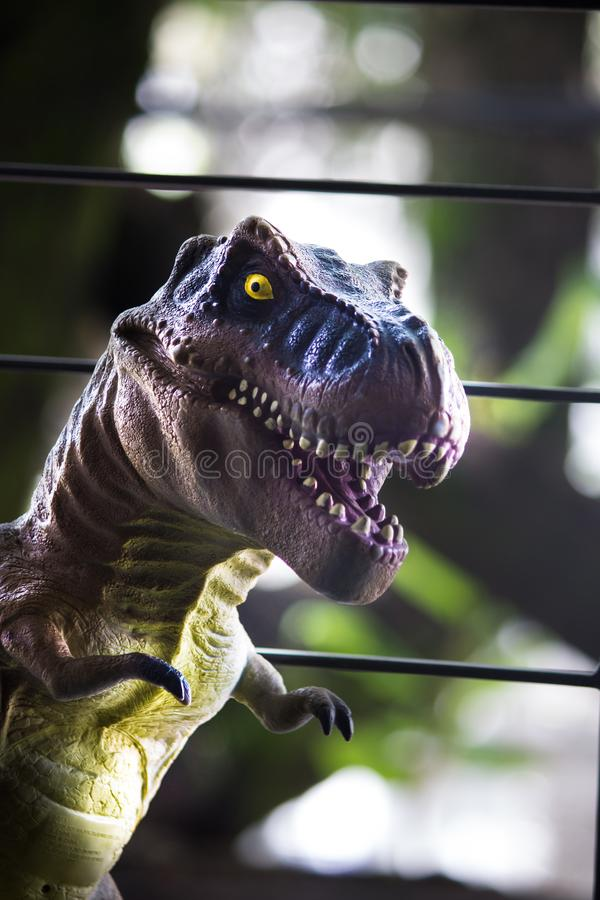 Un rex del tiranosaurio imagen de archivo libre de regalías