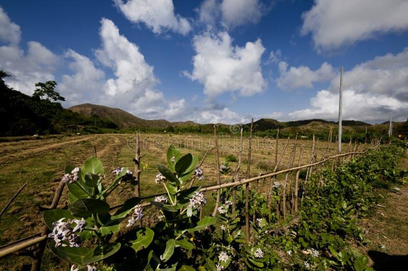 Un ridgehill avec le ciel bleu ci-dessus et le beau premier plan des fleurs 2on images stock