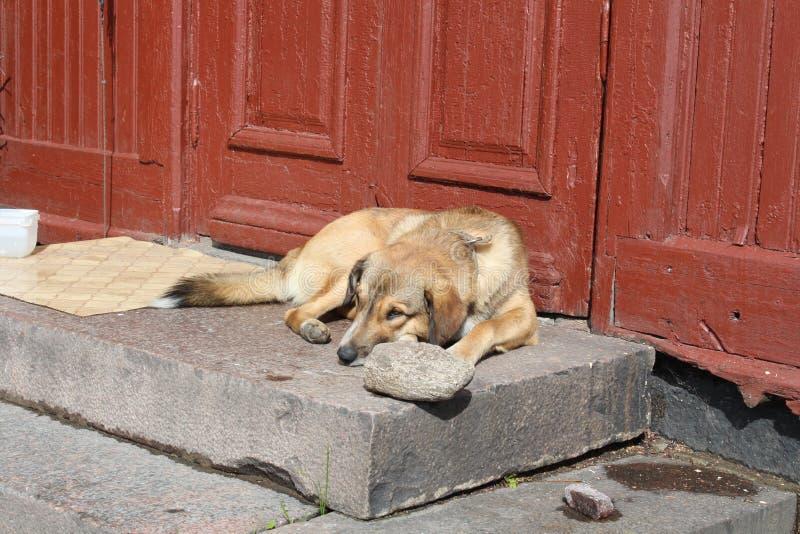 Un rilassamento di menzogne del cane pigro fuori nel calore di estate fotografia stock