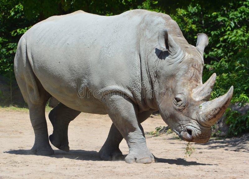 Un rinoceronte immagine stock