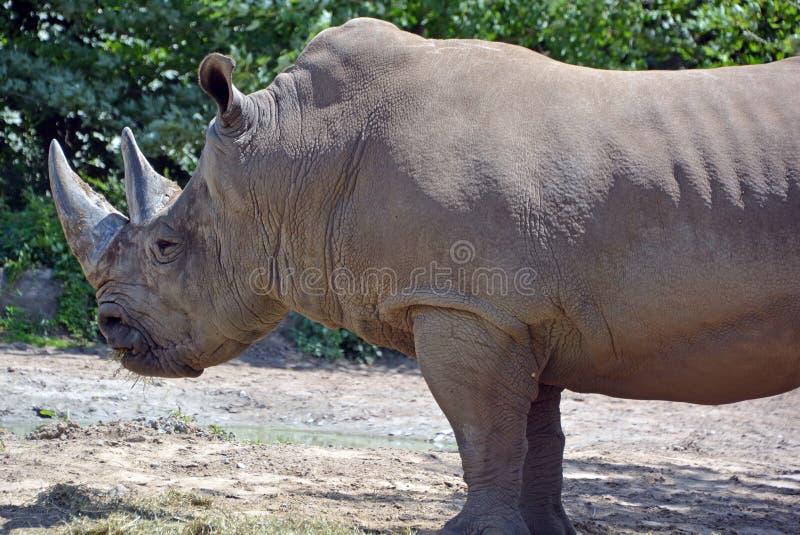 Un rinoceronte immagini stock
