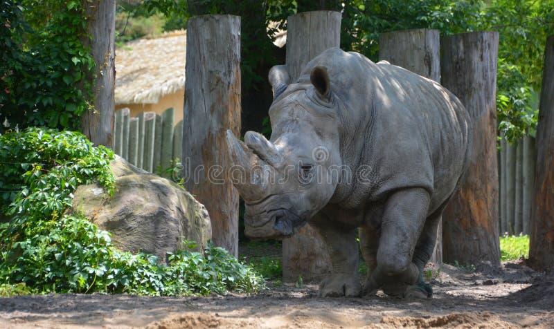 Un rinoceronte fotografia stock