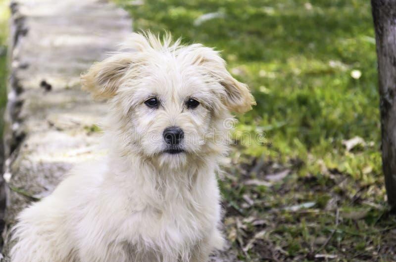 Un ritratto del cane fotografia stock