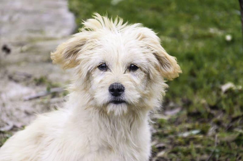 Un ritratto del cane fotografia stock libera da diritti