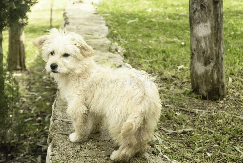 Un ritratto del cane fotografie stock