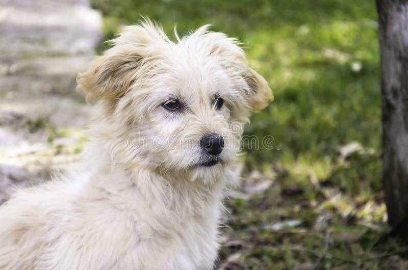 Un ritratto del cane immagine stock