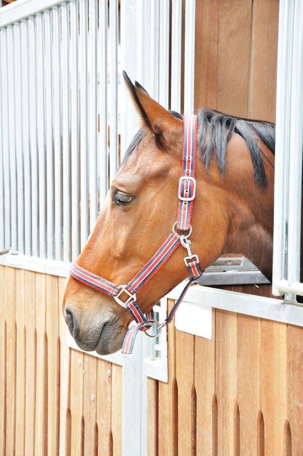 Un ritratto del cavallo marrone in granaio fotografia stock libera da diritti