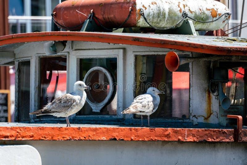 Un ritratto di due gabbiani su una vecchia nave arrugginita fotografie stock
