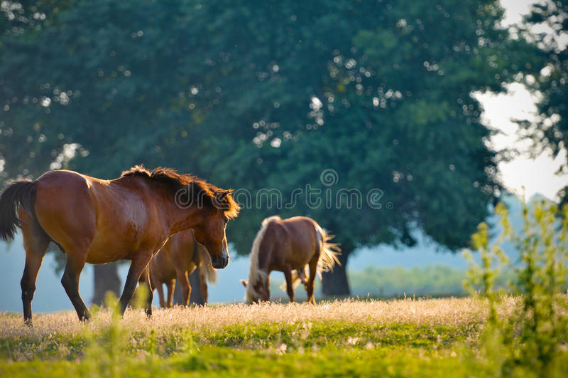 Un ritratto di profilo della testa di cavallo selvaggio fotografia stock