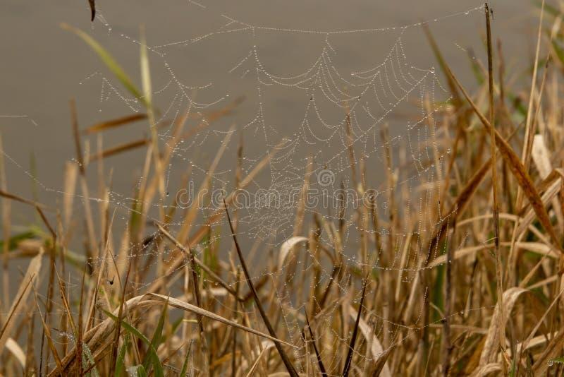 Un rocío cubrió el spiderweb fotografía de archivo libre de regalías