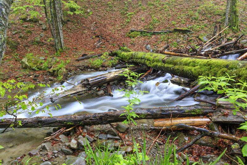Un rondin couvert de mousse est tombé par un courant de forêt dans une humidité, forêt humide photo libre de droits