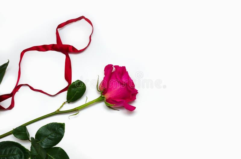 Un rosa hermoso subi? con una cinta bajo la forma de ocho aislada en el fondo blanco con el espacio para su texto foto de archivo