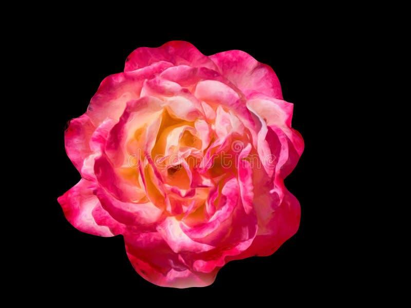 Un rose peinture à l'huile a monté avec le fond noir image stock