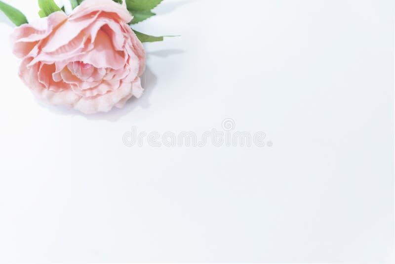 Un rose simple a monté avec les feuilles vertes sur un fond blanc, d'isolement, fin  photos stock