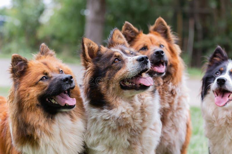 Un sacco di bei cani da notte all'aperto fotografia stock libera da diritti