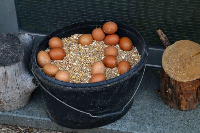 Un seau rempli de grains et d'oeufs de poulet images stock