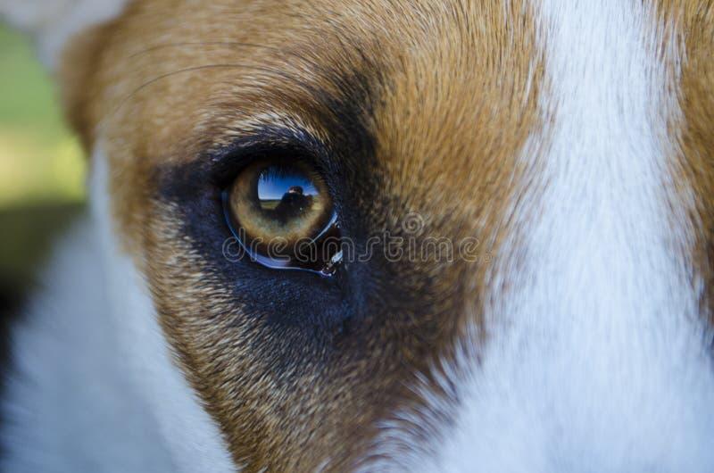 Un selfie-reflet photographe dans le eyeball des chiens chiots photographie stock libre de droits