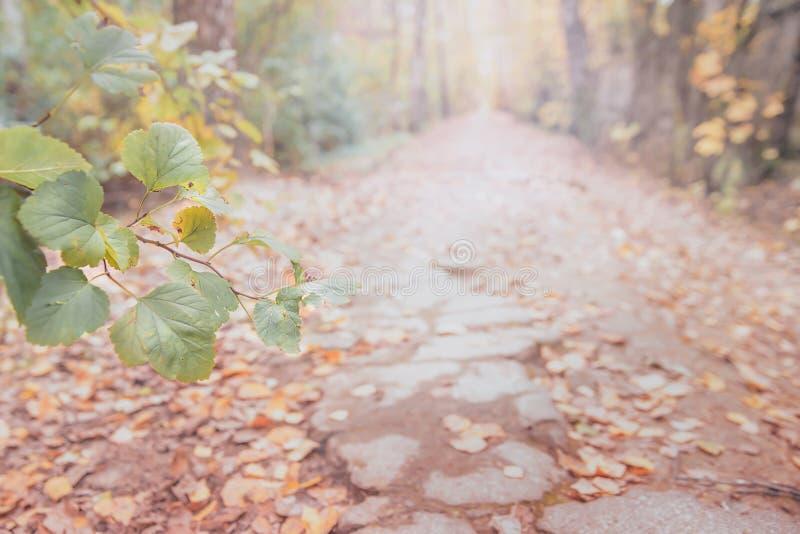 Un sentier dans la forêt automnale, au loin, avec des feuilles jaunes et rouges, fermez-vous photographie stock