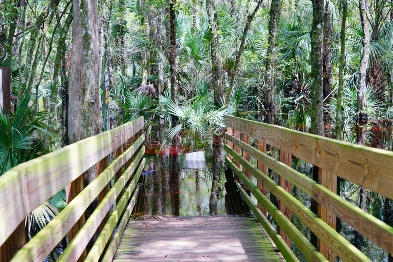 Un sentiero costiero sommerso nel parco del lago lettuce, fotografia stock