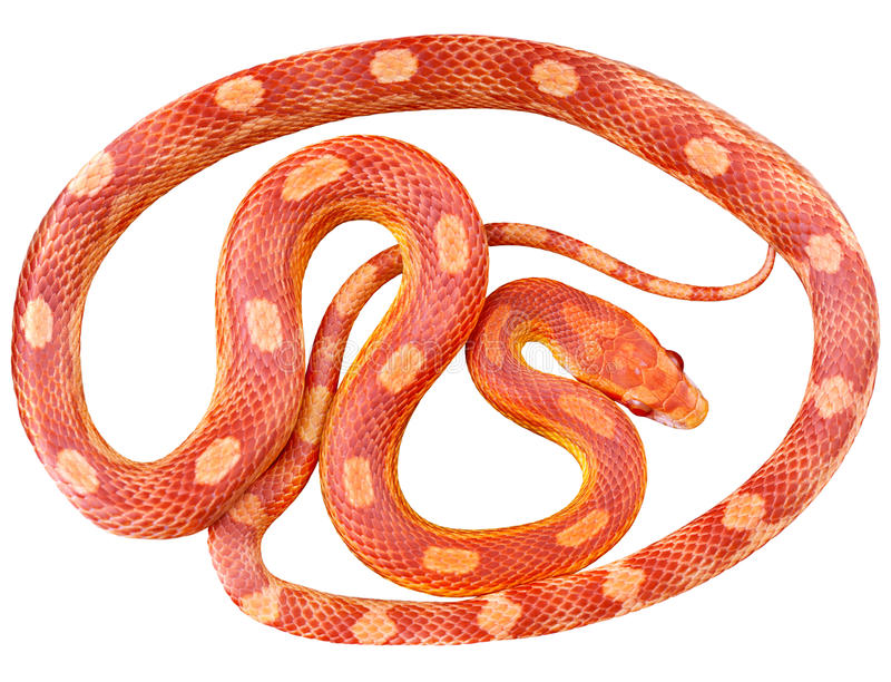Un serpente immagine stock