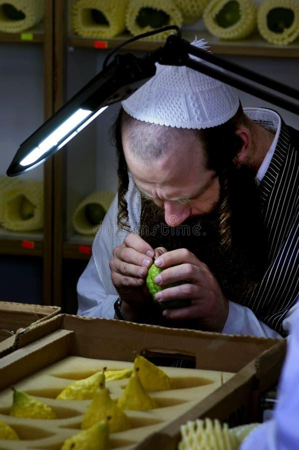 Un servizio di quattro specie per la festa ebrea di Sukkot immagine stock libera da diritti