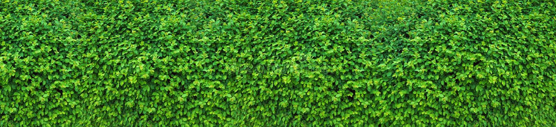 Un seto grueso de la primavera, un adorno decorativo de la primavera Panorama de los millares que consisten en de la pared verde  imagen de archivo libre de regalías
