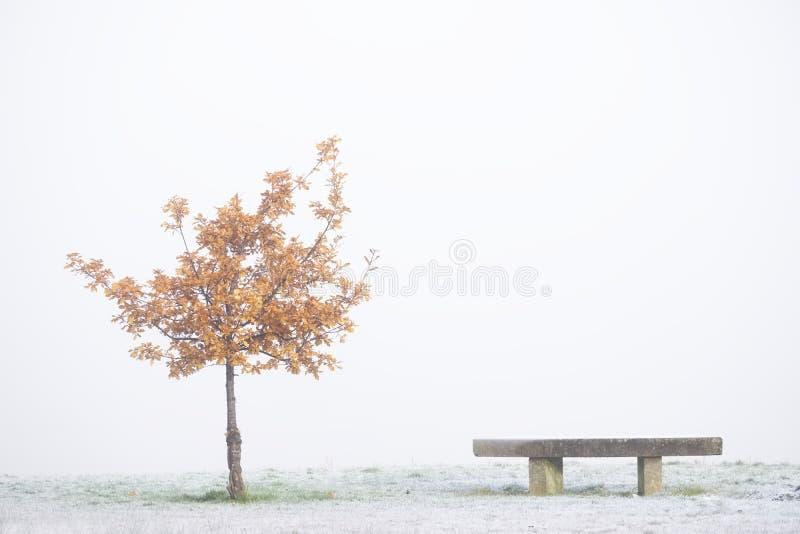 Un seul arbre et un banc de siège au parc sur la scène extérieure de brouillard blanc en hiver images libres de droits