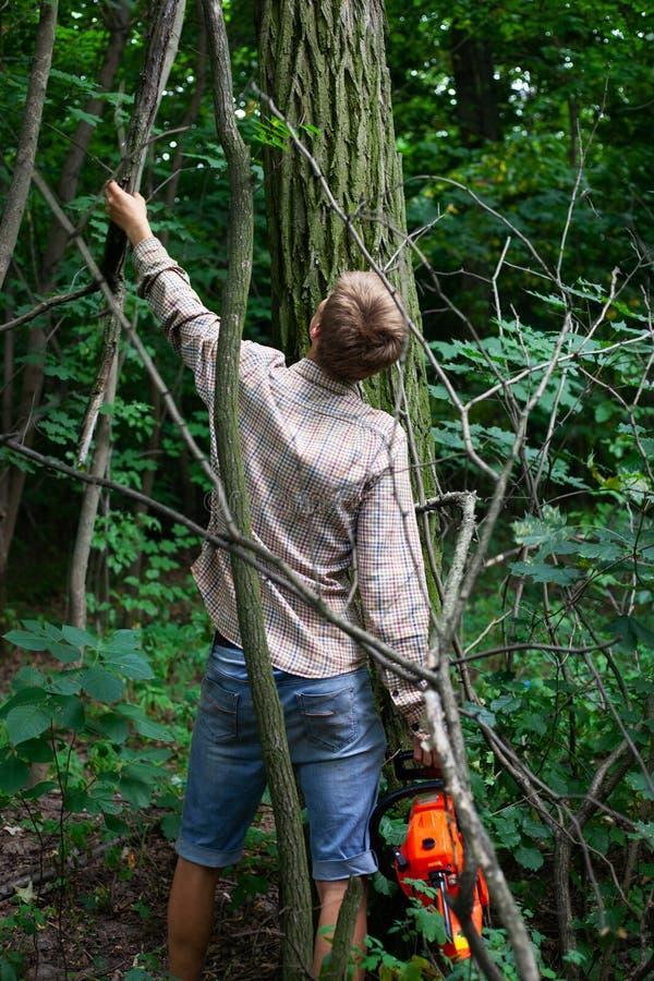 Un silvicultor limpia el bosque de arbustos, mantenimiento del bosque, un individuo con una motosierra selecciona los árboles par foto de archivo