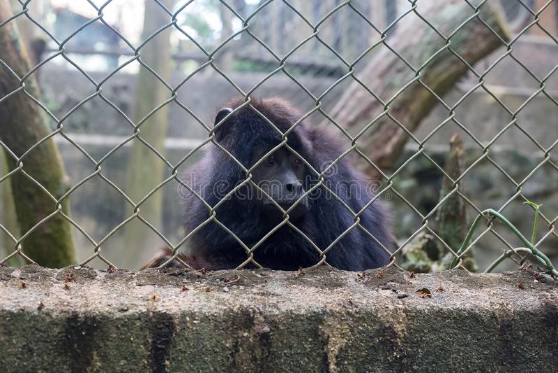 Un singe est triste dans la cage photo stock