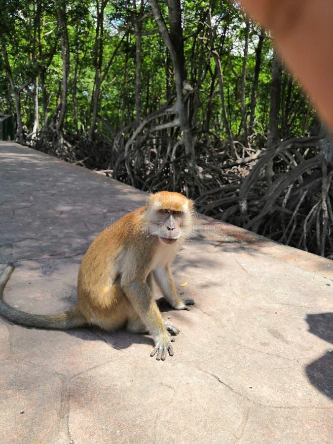 Un singe f?ch? photos libres de droits