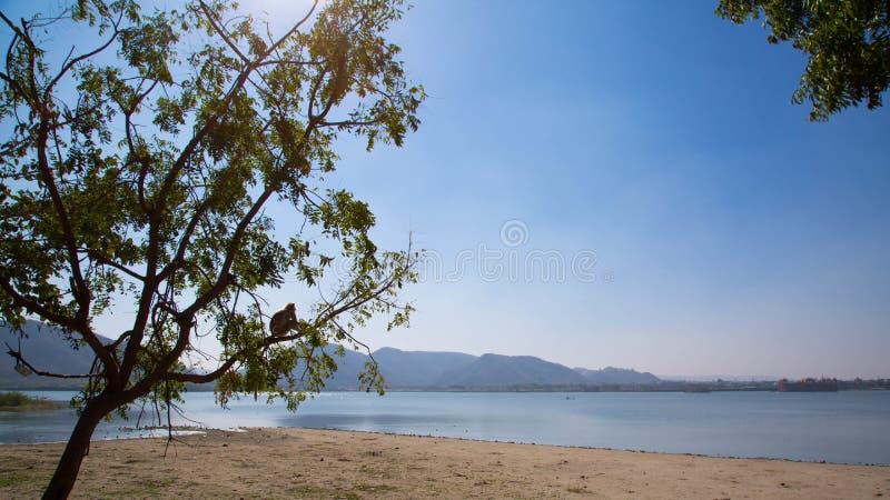 Un singe se reposant sur un arbre près d'un lac à Jaipur images libres de droits