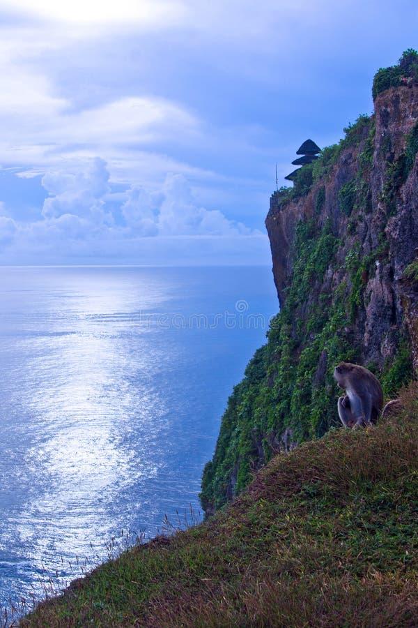 Un singe sur la falaise image stock