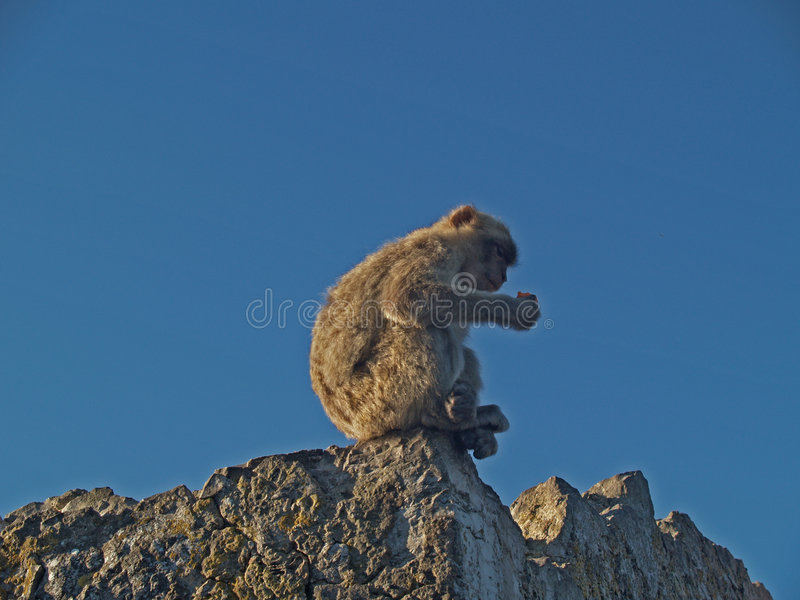 Un singe sur la roche photos stock