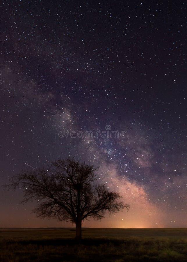 Un singolo albero con una Via Lattea fotografia stock