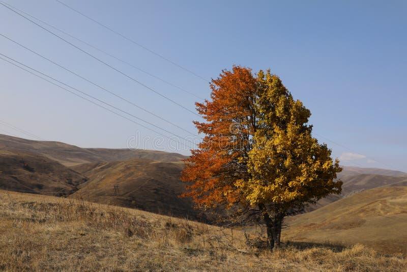 Un singolo albero fotografia stock