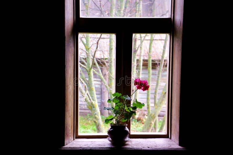 Un singolo fiore fotografie stock libere da diritti