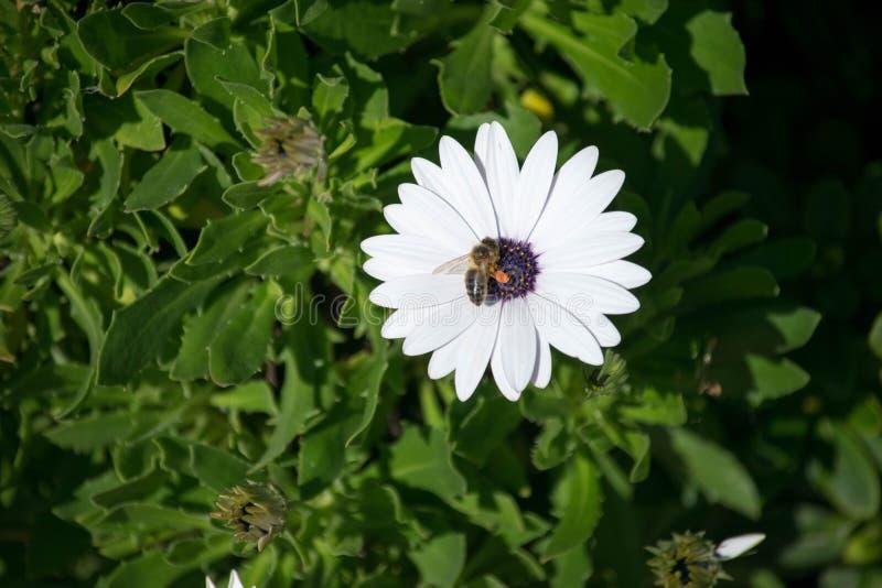 Un singolo fiore bianco fotografia stock