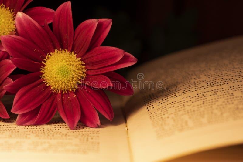 Un singolo fiore della gerbera su un vecchio libro fotografia stock libera da diritti
