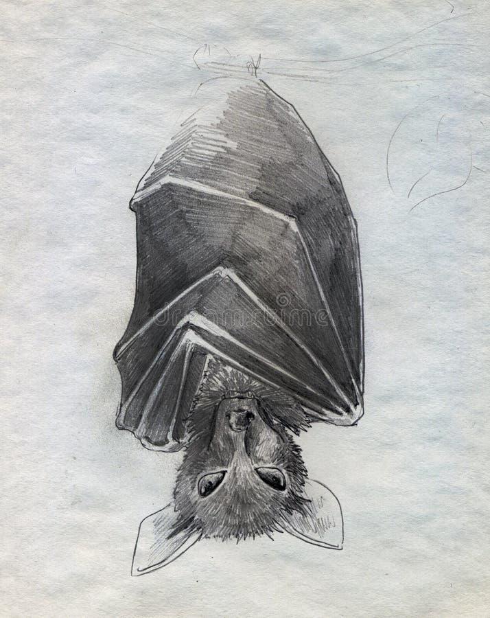 Pipistrello Fotografia Stock Libera da Diritti