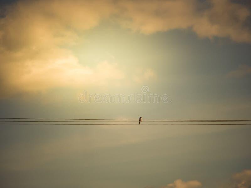 Un singolo uccello su un cavo fotografie stock