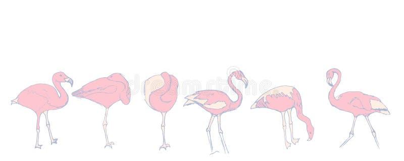 Un sistema de bosquejos de flamencos rosados libre illustration