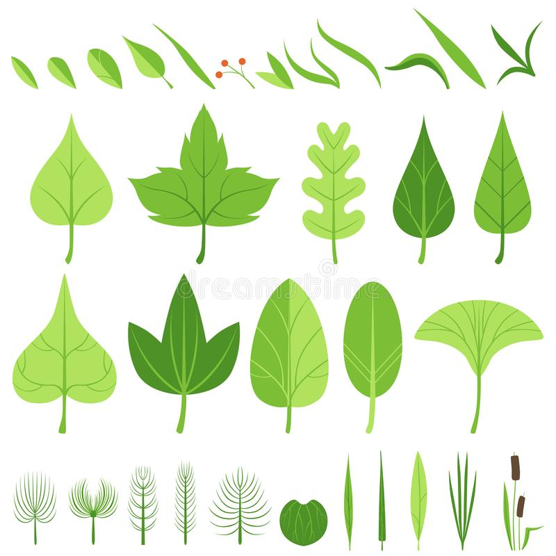 Un sistema de diversas hojas, de cuchillas de la hierba, de bastones, de arbustos, de cañas y de bayas Ilustración del vector ilustración del vector