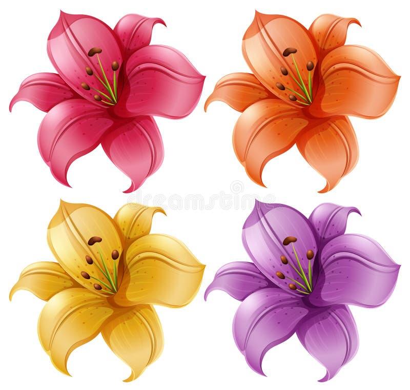 Un sistema de flores del lirio ilustración del vector