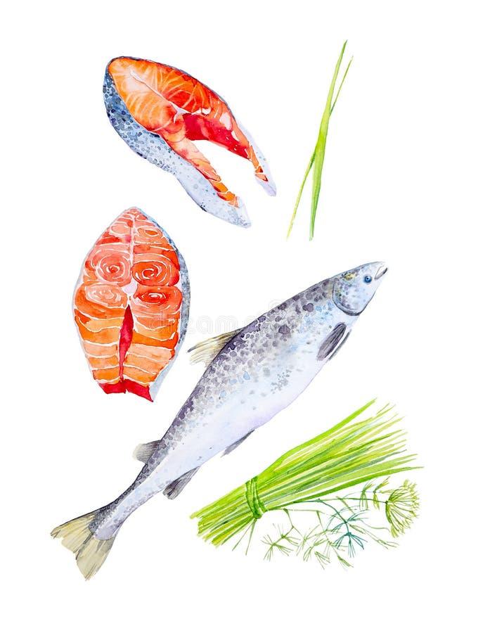 Un sistema de pescados rojos de la trucha y de pedazos enteros de filetes, y manojos de eneldo Ejemplo de la acuarela aislado en  imagen de archivo libre de regalías