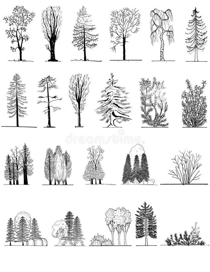 Un sistema de siluetas del árbol, para el diseño arquitectónico o del paisaje ilustración del vector